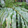 Taman Sari Plants