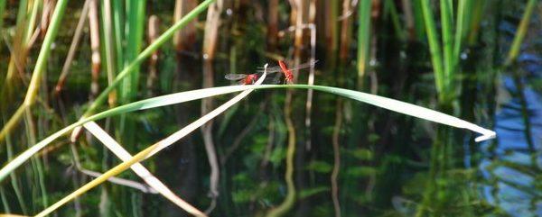 Dragonfly photo by Akshay Sateesh.