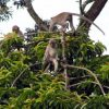 May 2005 -- Long-Tailed Macaques