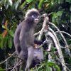 January 2006 -- Rambutans Attract Monkeys