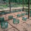 First Turtle Hatchery Season at Chendor